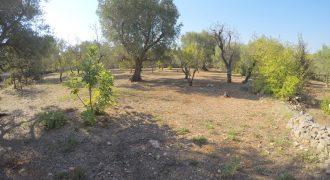 Terreno Contrada Zumpicchio